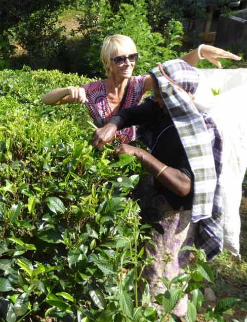 Découverte du Thé bio au Sri Lanka