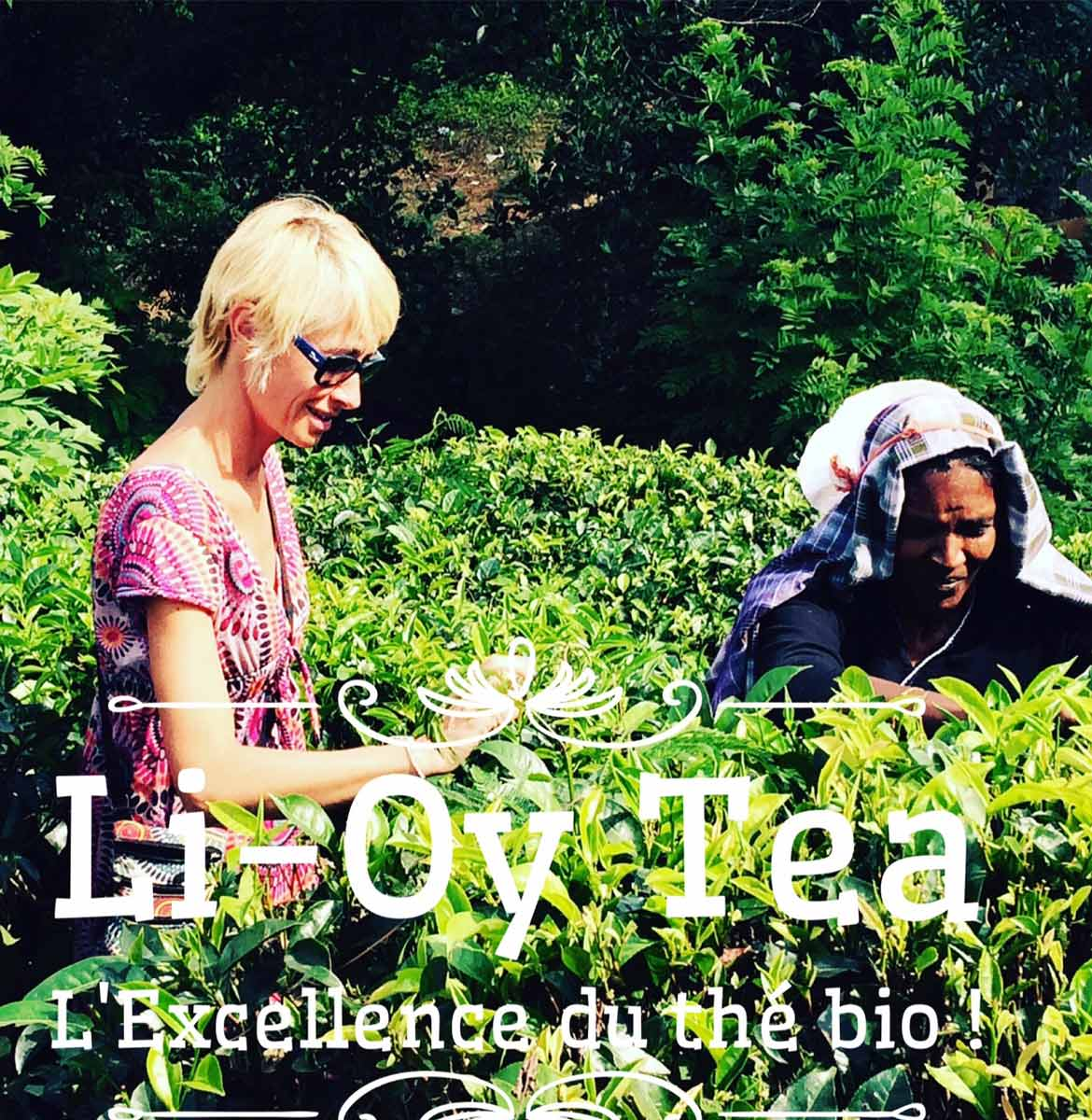 plantation de thé bio au Sri Lanka
